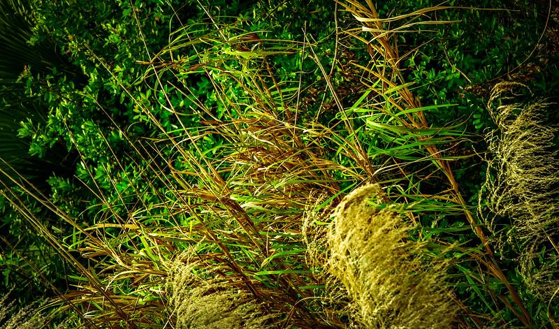 Grass-137.jpg