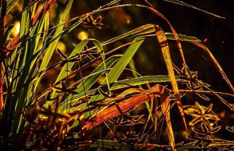 It's Never Just Grass-128.jpg
