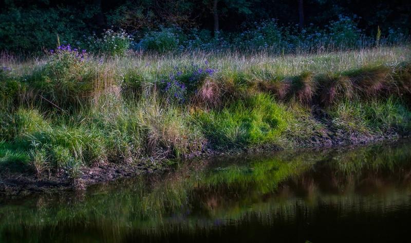 Grass-012.jpg
