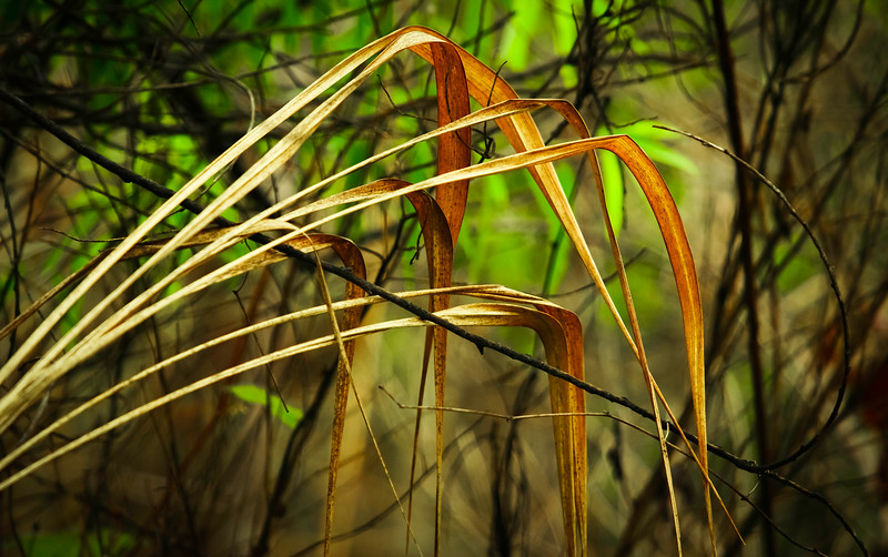 Grass-144.jpg