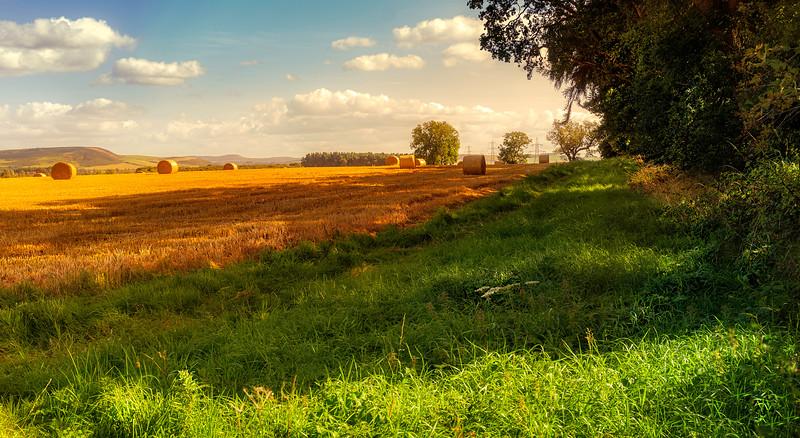 Grass-062.jpg
