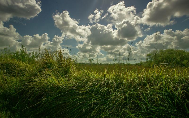 Grass-084.jpg