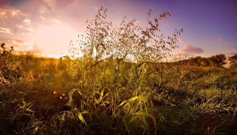 Grass-020.jpg