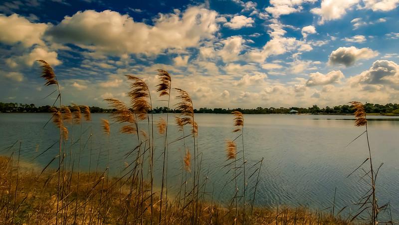 Grass-088.jpg