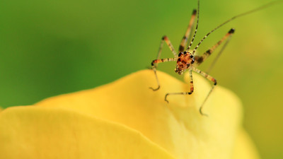 Tiny Grasshopper (2) by Bruno Suignard