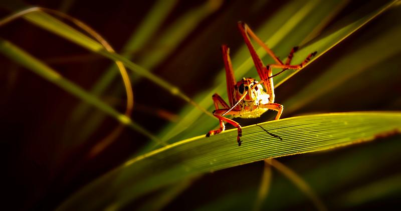 Grasshoppers 41.jpg