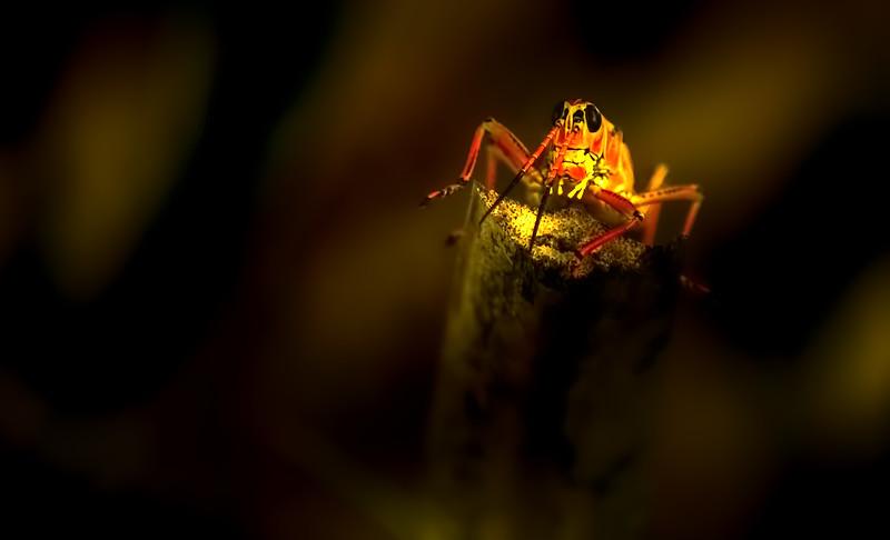 Grasshoppers 101.jpg