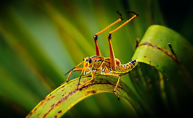 Grasshoppers 14.jpg