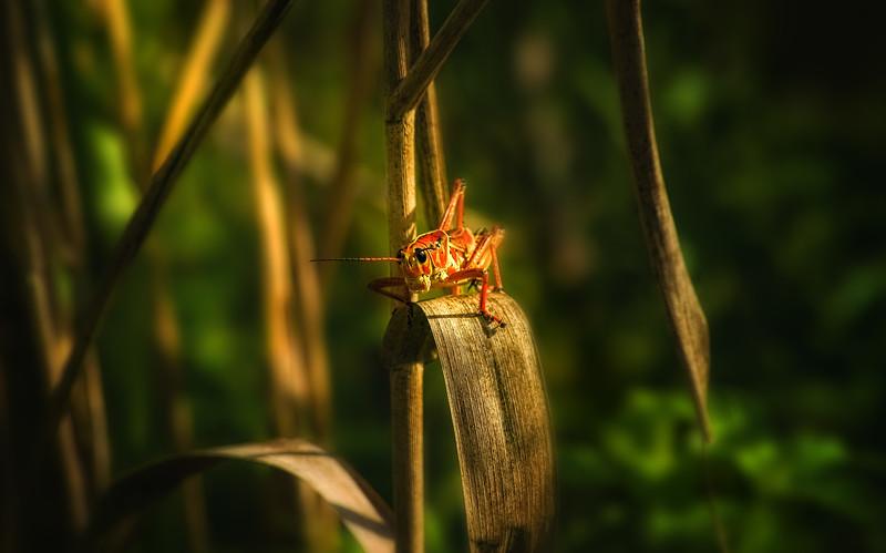 Grasshoppers 111.jpg