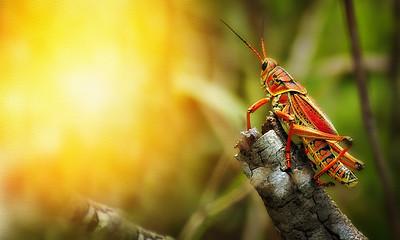 Grasshoppers by Ray Bilcliff - www.trueportraits.com