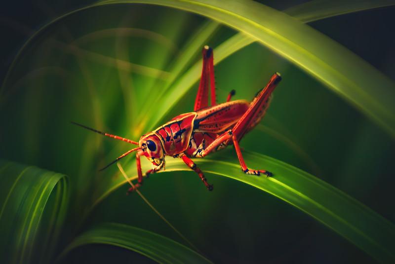 Grasshoppers 13.jpg