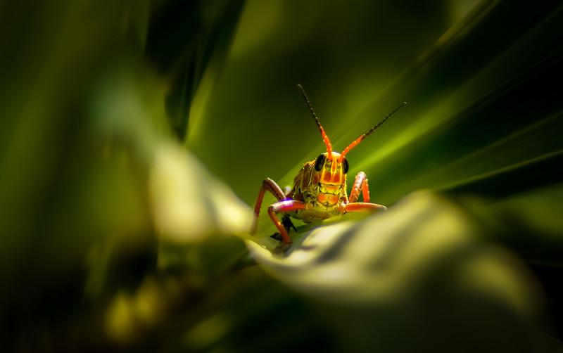 Grasshoppers 94.jpg