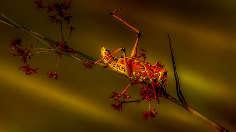 Grasshoppers 29.jpg