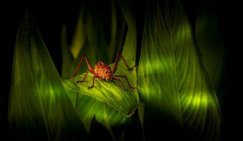 Grasshoppers 27.jpg