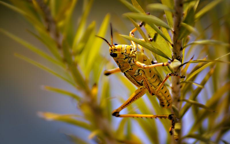 Grasshoppers 18.jpg