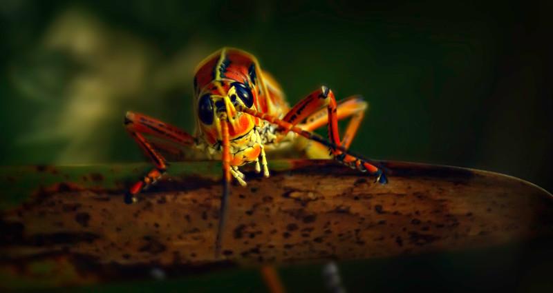 Grasshoppers 24.jpg