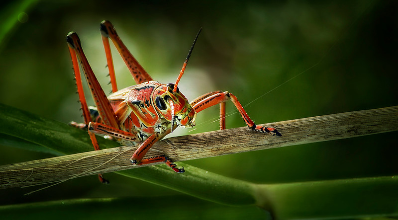 Paintography of Grasshoppers by Ray Bilcliff - www.trueportraits
