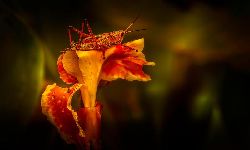 Grasshoppers 28.jpg