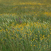 Grassland : 3 galleries with 138 photos