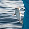 florida bay fishing-77