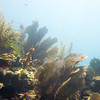 sombrero reef diving-31