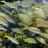 sombrero reef diving-32