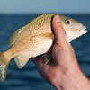 florida bay fishing-83