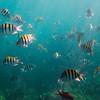 sombrero reef snorkeling