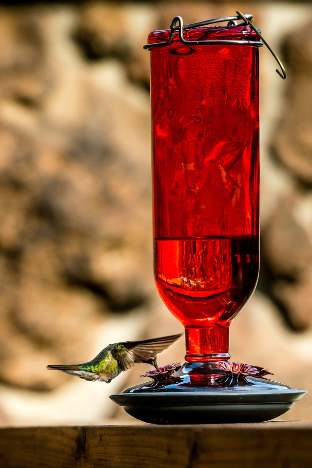 May 29th,<br /> <br /> The hummingbird competes with the stillness of the air. – Chogyam Trungpa<br /> <br /> It is wonderful having hummingbirds share my day.  I enjoy these birds because they put on such a show.  Since I am so interested in these summer guests, I  read about them.  For such tiny creatures they can be tenacious and fend off larger birds from their nests or feeders.   They are only located in the western hemisphere and the few species found in North America are migratory.   These active birds do not walk, but they can use a clumsy sideways hop when needed.  Their feet are primarily used for perching. They have an impressive metabolism that is the highest of any bird species.  At night, in cold weather, or when food is in short supply, they enter a state referred to as torpor which is a short-term hibernation. One sad fact is most hummingbirds do not survive the first year, but those who do can live up to 7 - 8 years.  <br /> <br /> For such entertaining  and endearing birds, they do not mate for life. Females have the sole responsibility for mate selection.  Being particular, females visit a male's territory where the male performs a ritual to impress her.  If she doesn't find this display to her liking she moves on for a better option.  Once she makes her selection and they move on to mating, the responsibility is on her to build the nest, warm the nest and raise the young. The male moves on and  mates with any females he can attract.  I wonder how the females feels about this?  Do they prefer this?  Would you call the male irresponsible or is that giving them human characteristics?  <br /> <br /> These feisty tiny creatures are a joy for sharing of a summer. <br /> <br /> Peace.