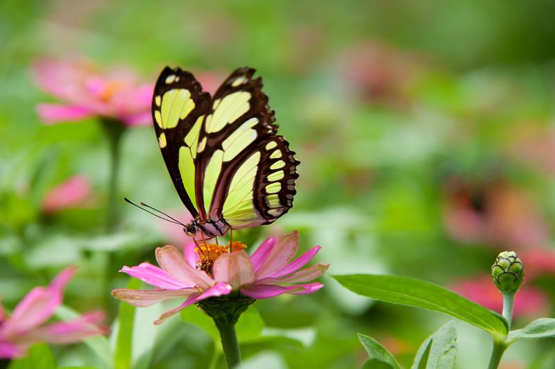 2MD Butterflies_061712_0279