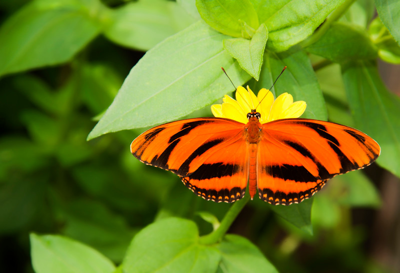 2MD Butterflies_061712_0529