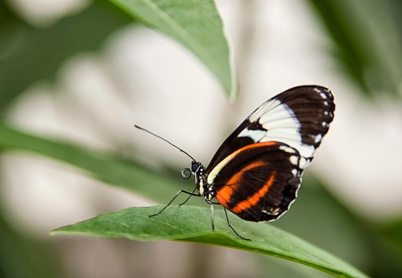 2MD Butterflies_061712_0362