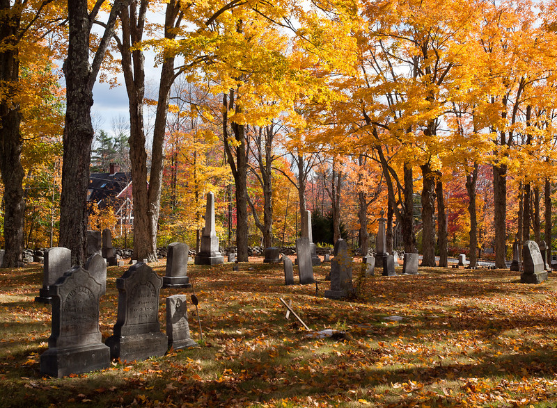 The trees in Cutter Cemetery, Jaffery NH took my breath away in the afternoon light.