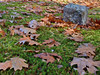 Footstone with leaves and moss - Deerfield NH<br /> Nov 2009