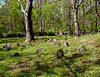 Elders<br /> Ordione Point Cemetery - could be NH's oldest, dating from the early 1600s. Many stones are rough and uncut.  It's a beautiful location with the most chestnut trees I've ever seen.