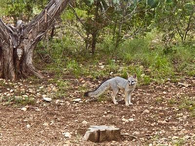 071914-20 fox