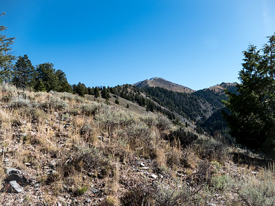 Just up on the ridge above Federal Gulch, Grays Peak is only a few miles distant.
