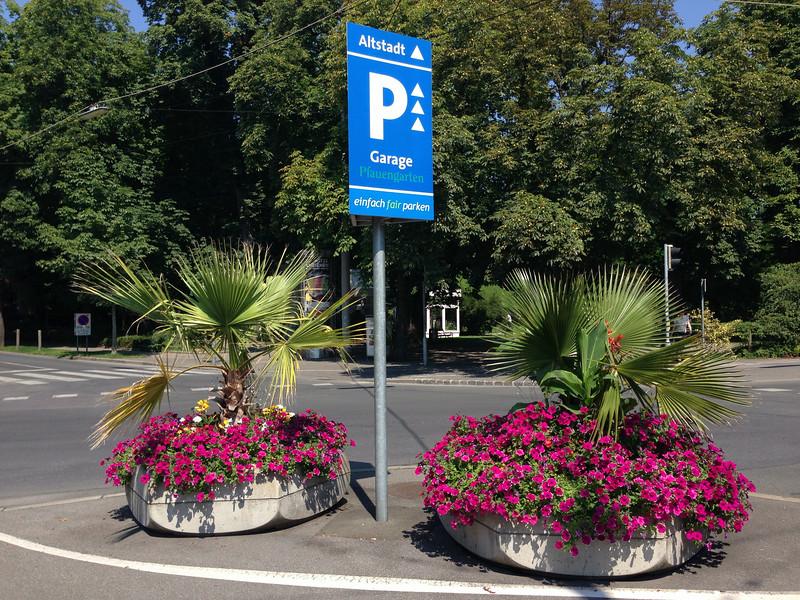 Blumenkästen mit Palmen im Stadtpark