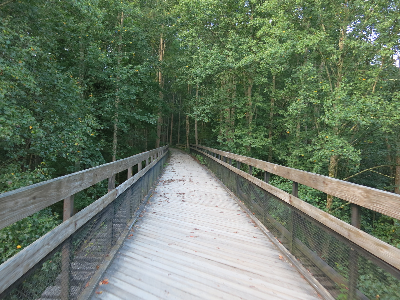 Tulip Poplar trees surround the south end of the High Bridge