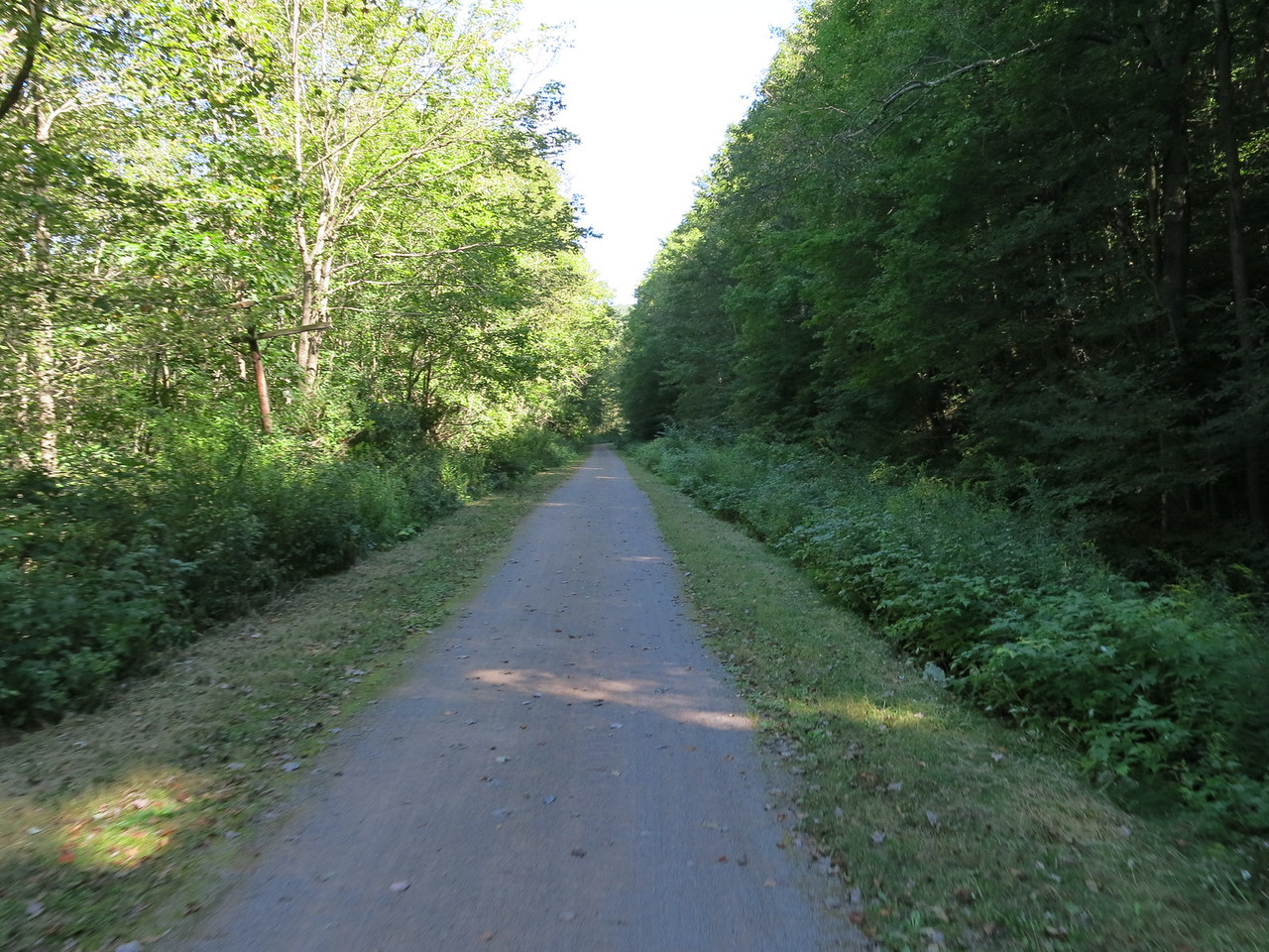 Trees no longer cover the trail