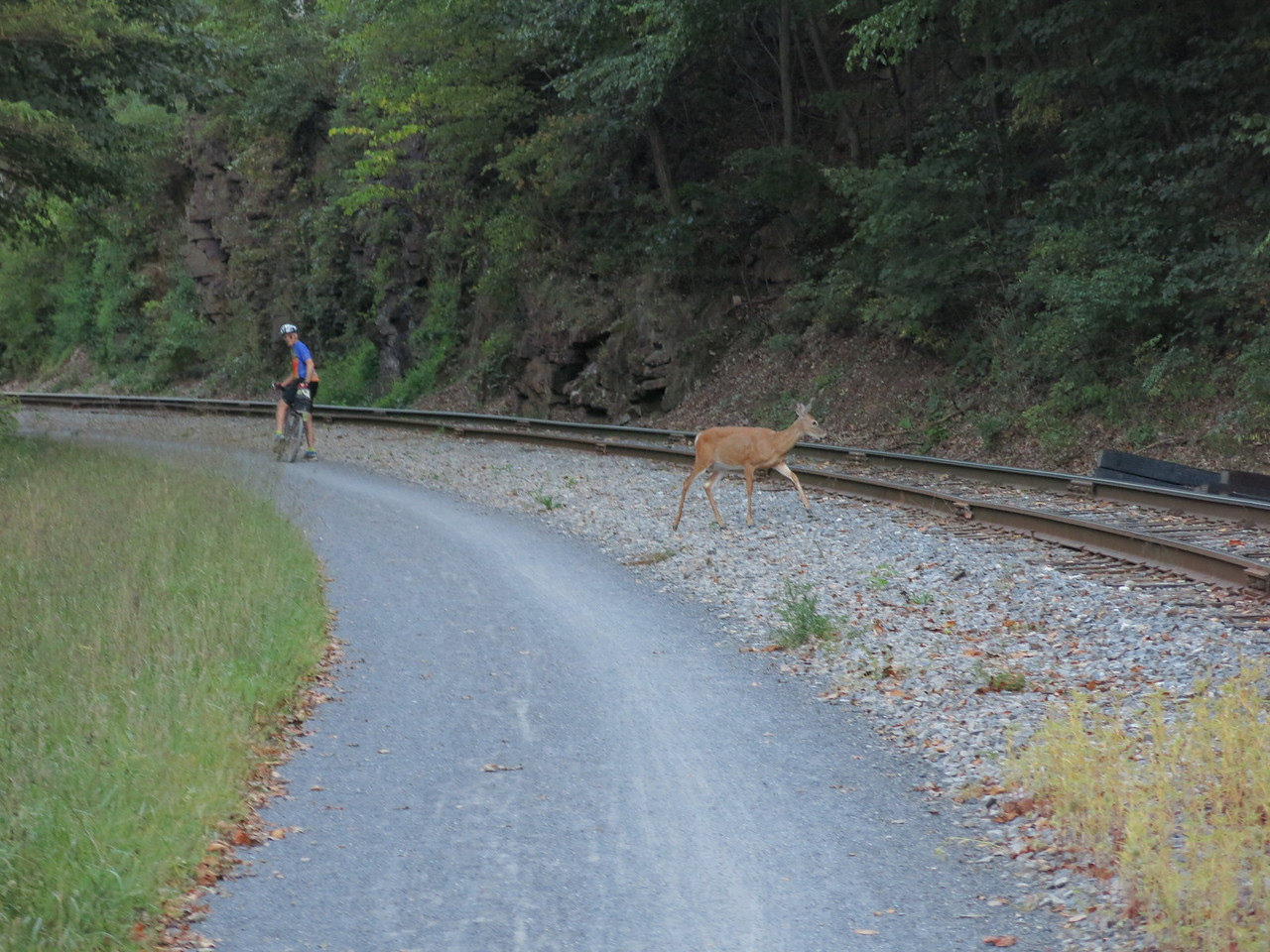 Sharing the trail with a loping deer