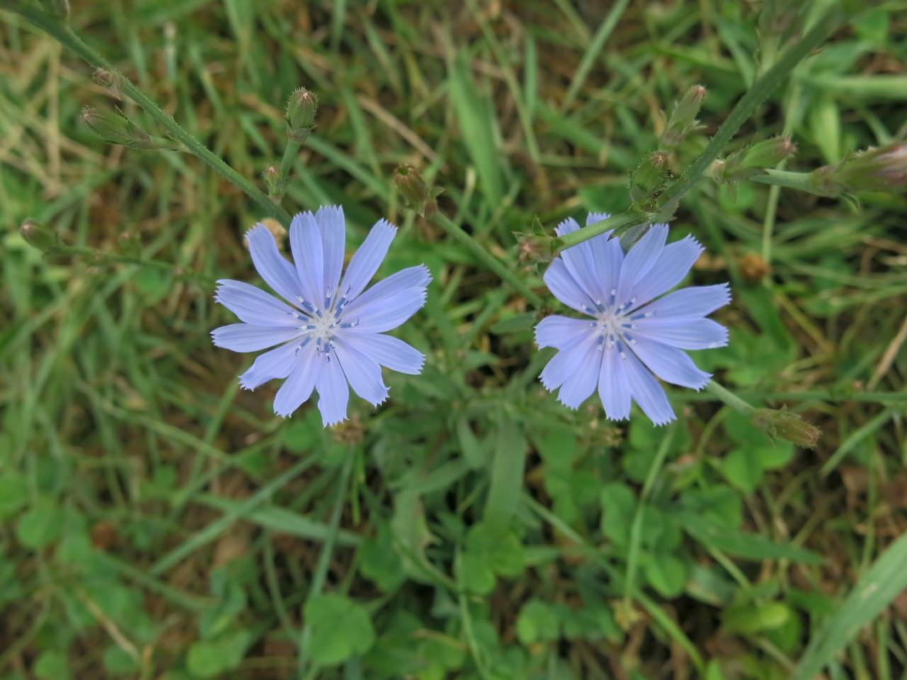 Delightful wild flowers