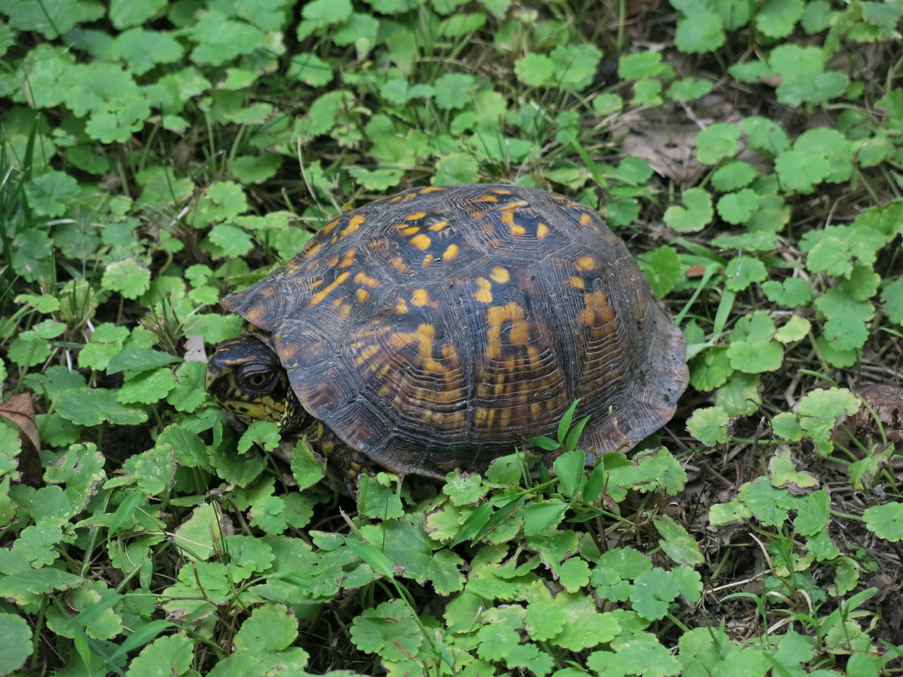 Intriguing tortoise along the trail