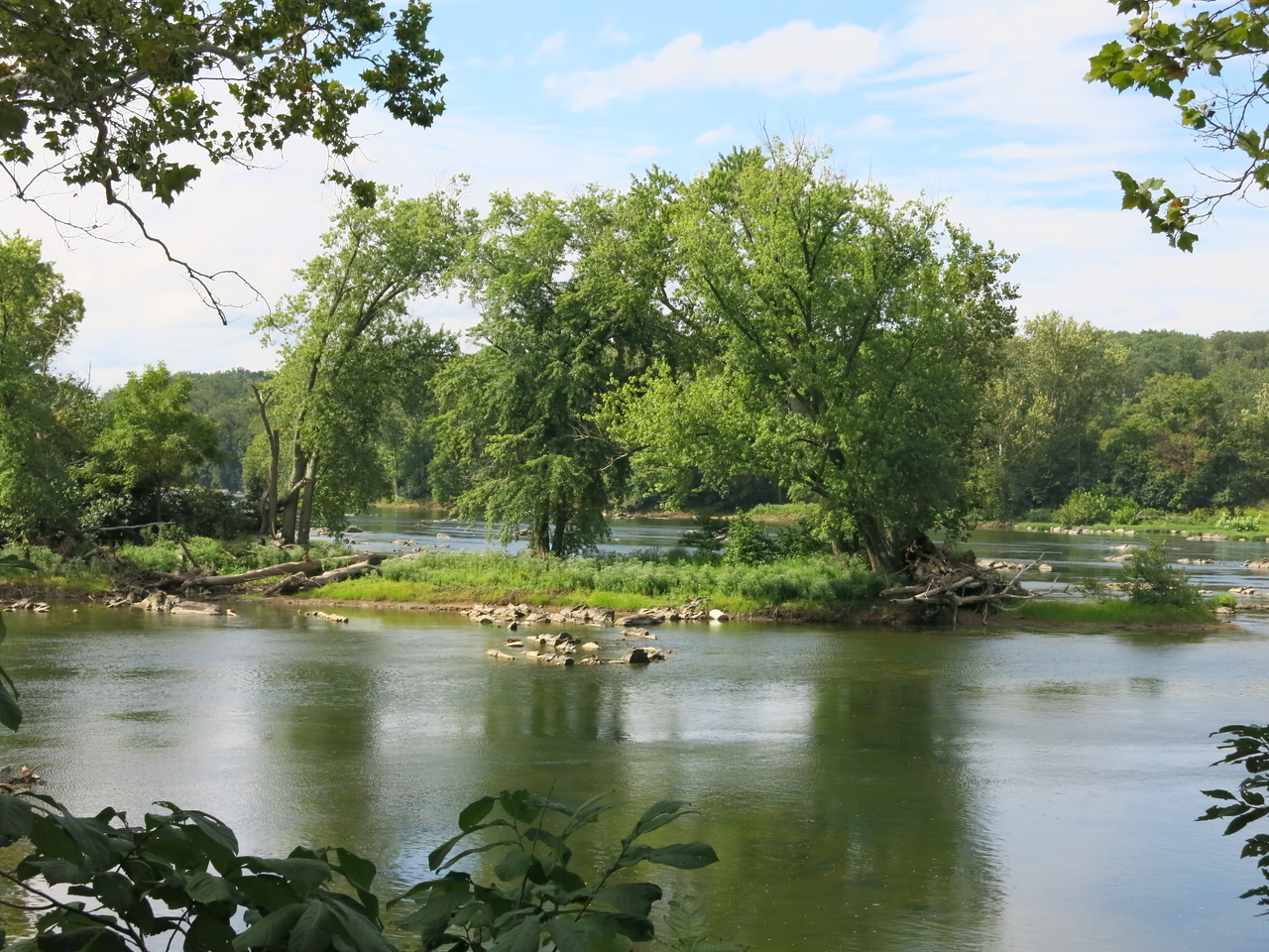 Trees on an an island in the Potomac River