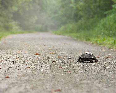 caution:  turtle ahead