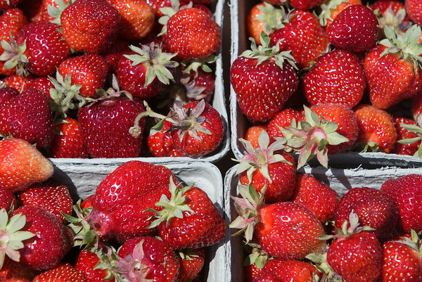 Record-Eagle file photo/Douglas Tesner<br /> It's almost time to fill our buckets and our bellies with locally grown strawberries.