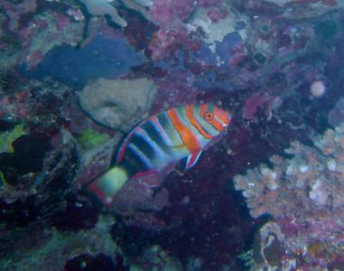 Pixie Reef