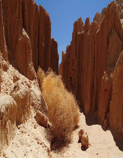 Tumbleweed Alley-dramatic erosion of siltstones and clays create rising spires, Cathedral Gorge State Park, NV