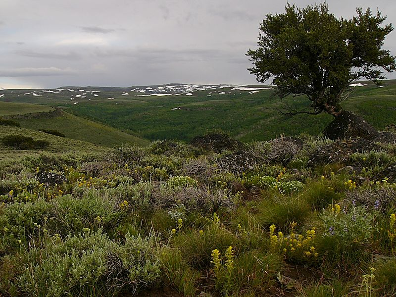 Steens Mountain and wildflowers.