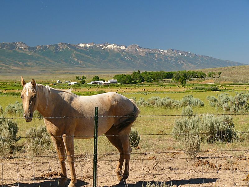 Western images --- horse, farm, mountains...and barbed wire. The Ruby Mountains, northern Nevada.